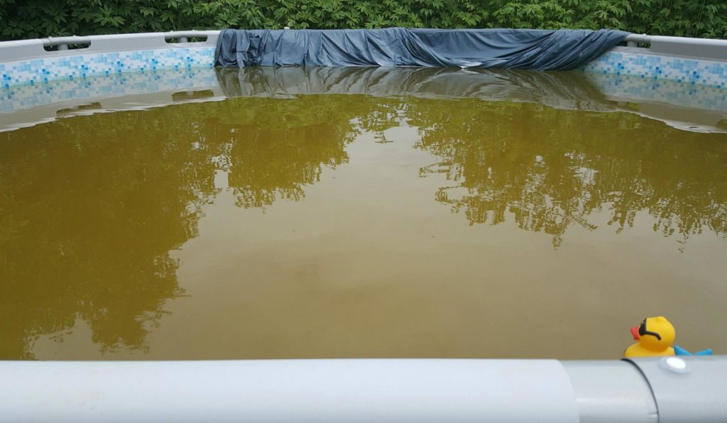Dark pool water Bottom Our Pool Water Is Dark Brown Color Can Ferritabs Help Ask The Pool Guy Ask The Pool Guy Our Pool Water Is Dark Brown Color Can Ferritabs Help Ask The