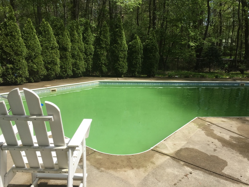 Why does everyone assume a green pool means algae? What are some ...